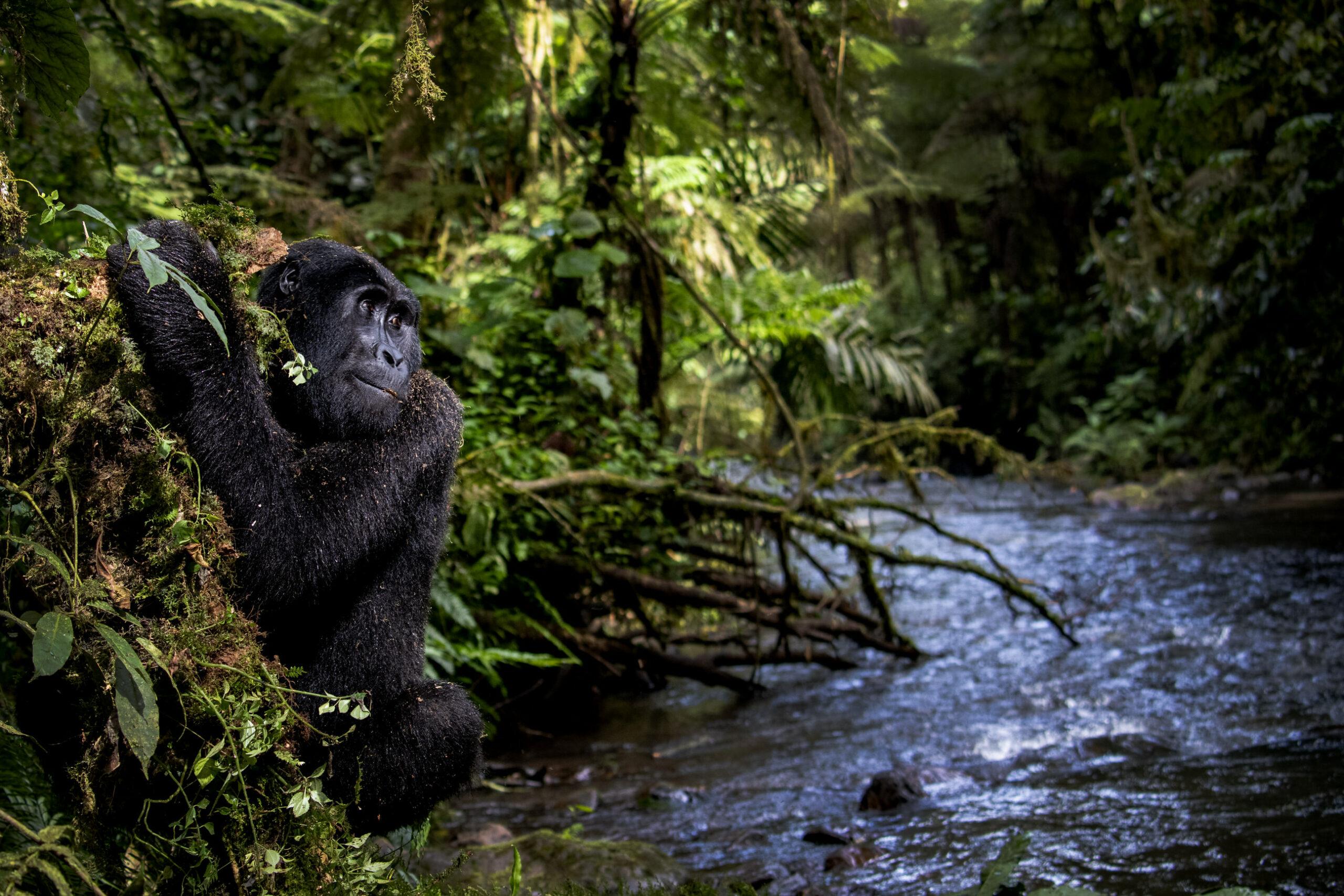 Fondation Prince Albert II : découvrez les plus belles photos de nature primées